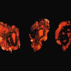 Deathspell Omega - Kenose - LP