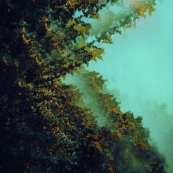 Polymoon - Caterpillars Of Creation - LP Gatefold