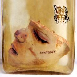 Putrid Offal - Anatomy - CD EP DIGIPAK